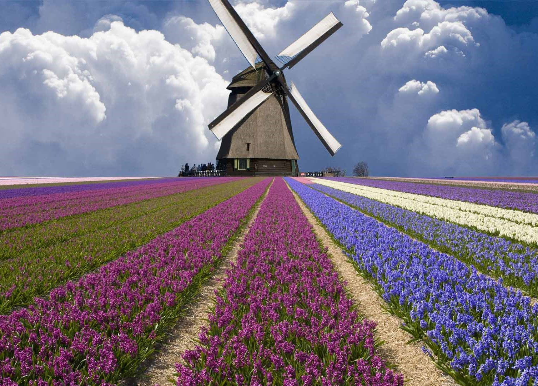 Potovanje po Nizozemski – cvetje,  diamanti in mlini na veter